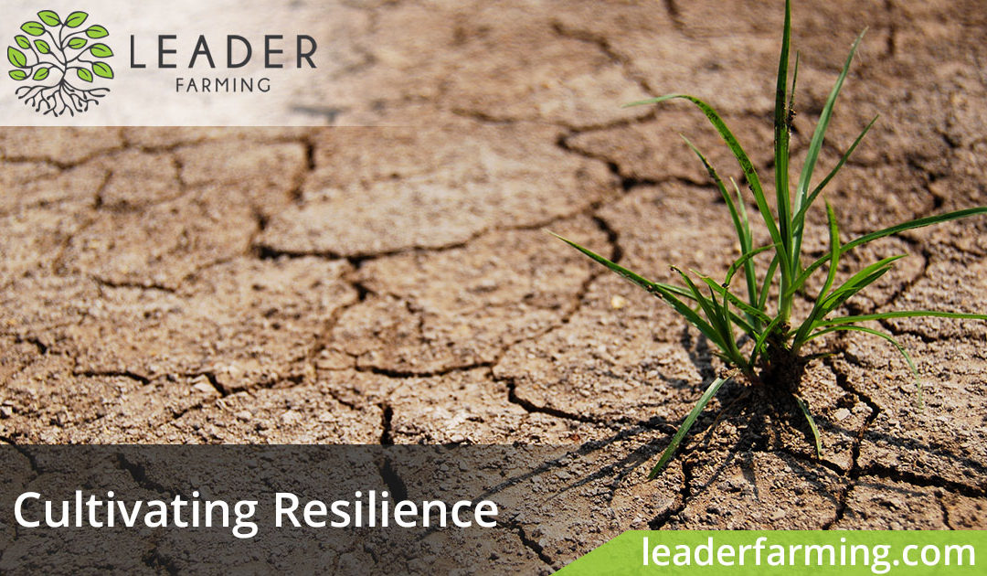 Cultivating Resilience